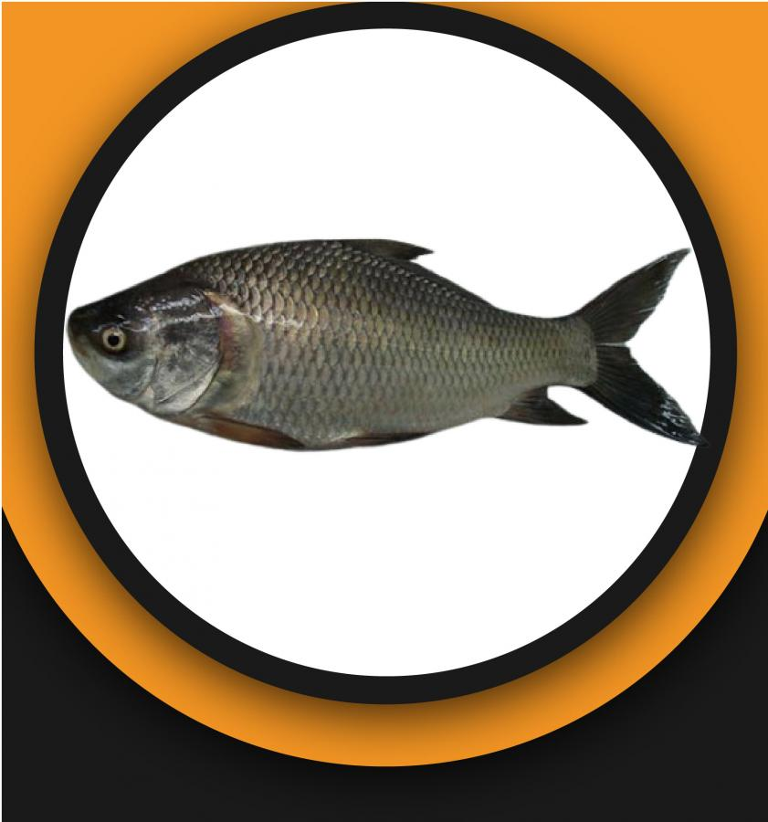 Katla Fish 1.2kg+