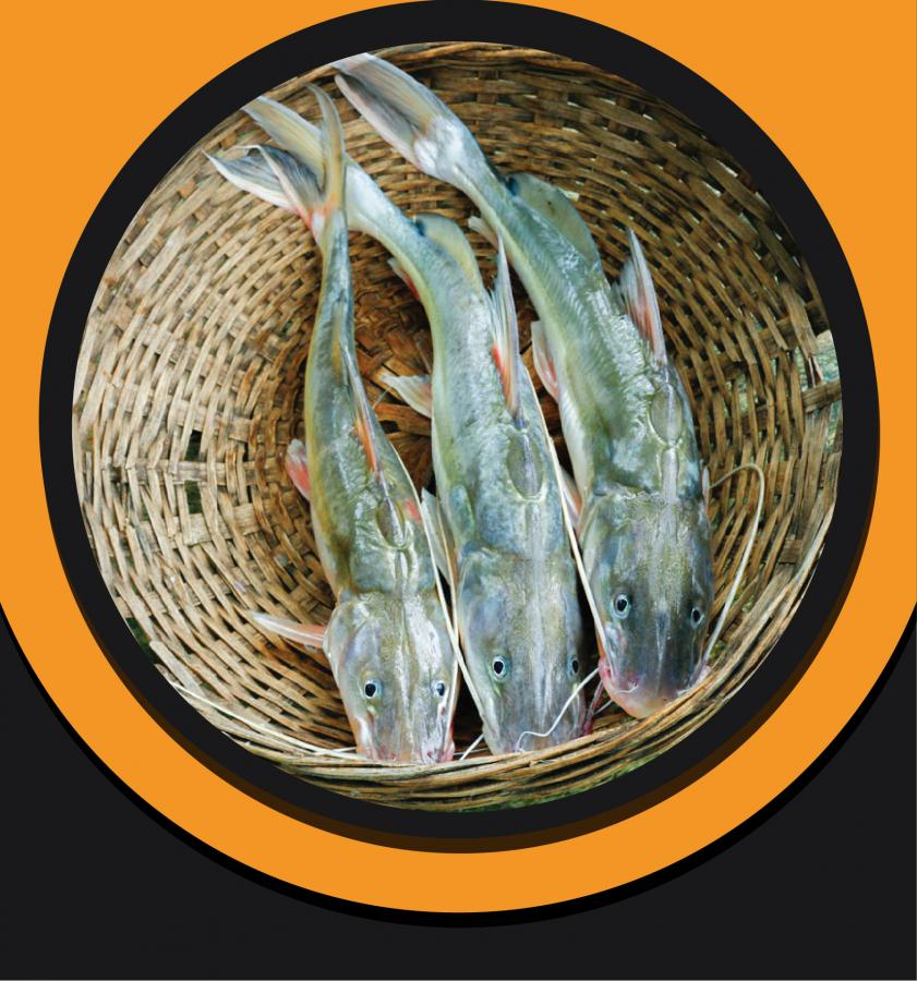 Aire  Fish 2kg+ To 5kg+