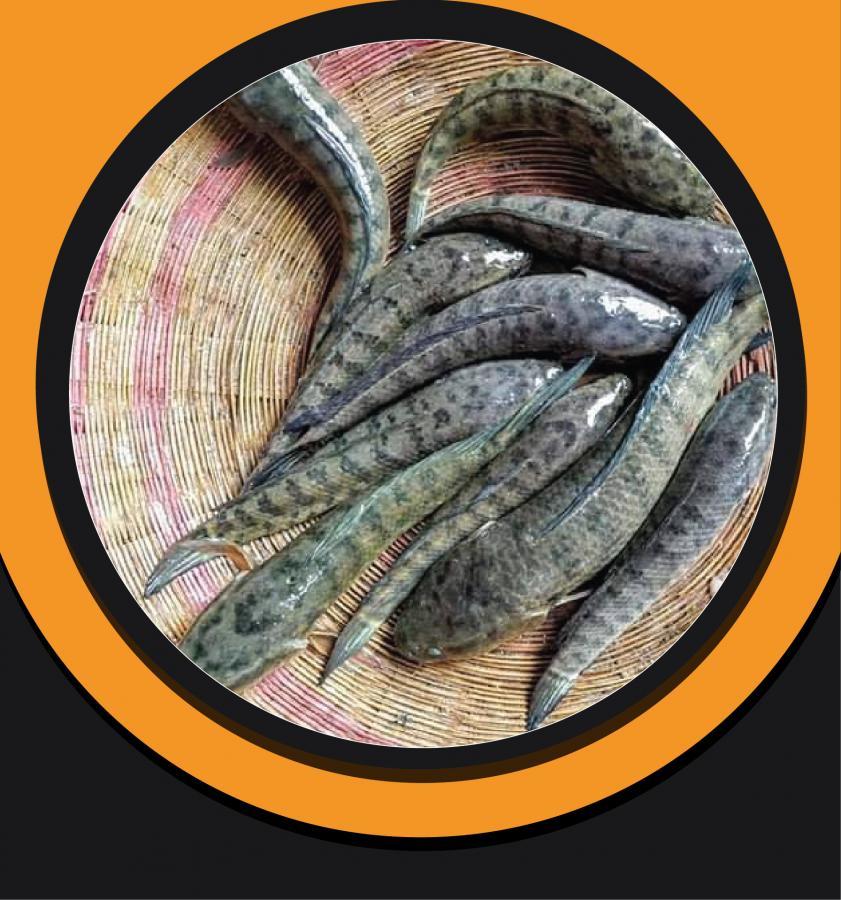 Taki Standard Fish