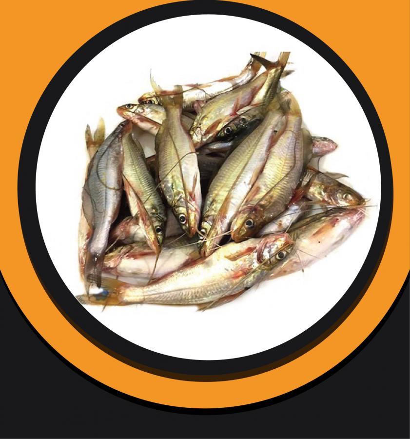 Gulsha Fish