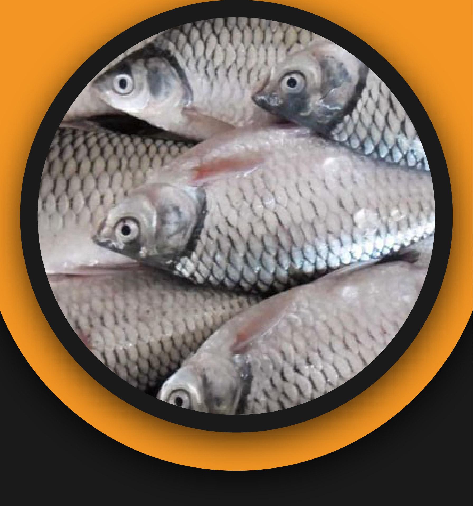 Shorputi Fish (3- to 5 pcs kg)